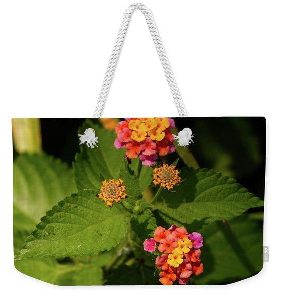 Cluster Of Lantana Flowers Weekender Tote Bag