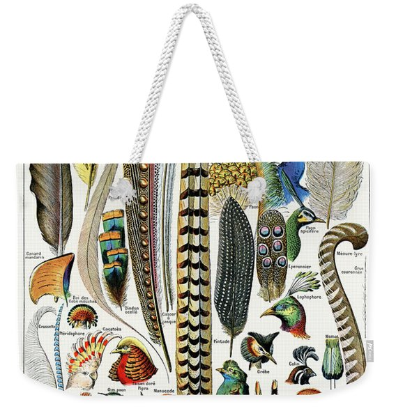 Collection Of Different Plume Types Weekender Tote Bag