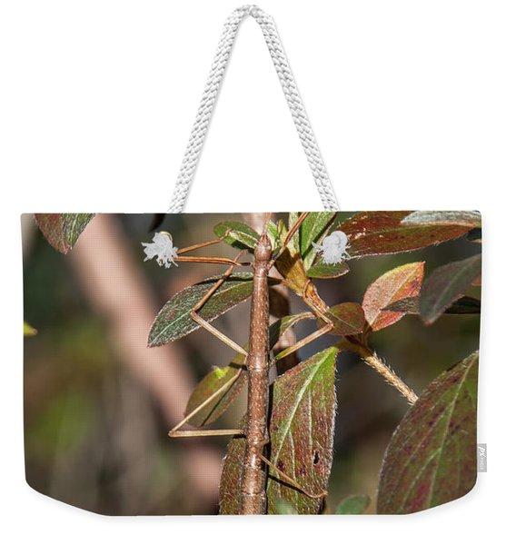 Common Walkingstick Or Northern Walkingstick Din0263 Weekender Tote Bag