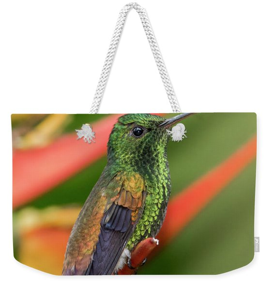 Weekender Tote Bag featuring the photograph Copper Rumped Hummingbird by Rachel Lee Young
