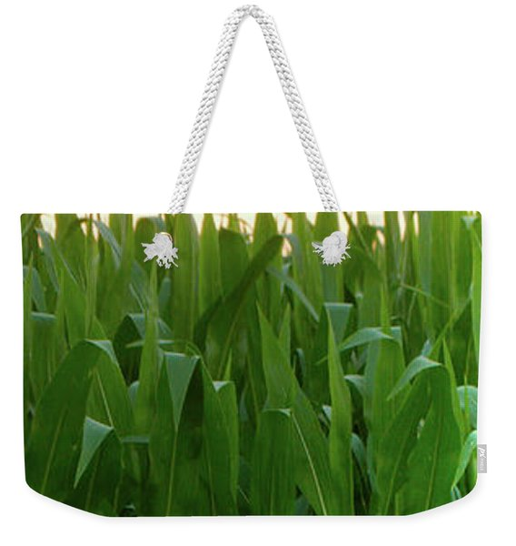 Corn Of July Weekender Tote Bag