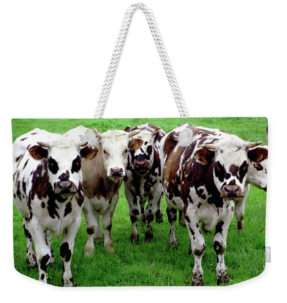Weekender Tote Bag featuring the photograph Cow Group by Frank DiMarco