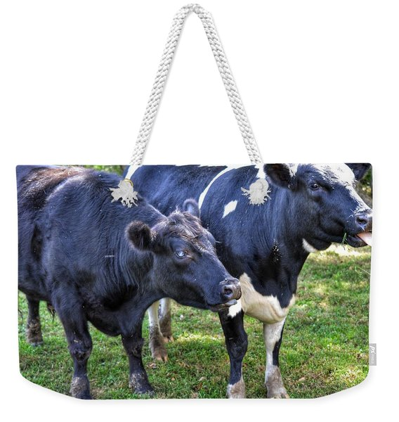 Cows Sticking Out Tongues Weekender Tote Bag