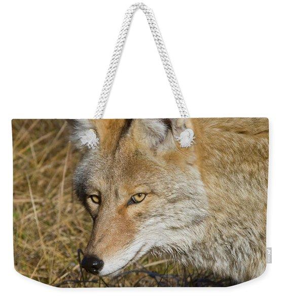 Coyote In The Wild Weekender Tote Bag
