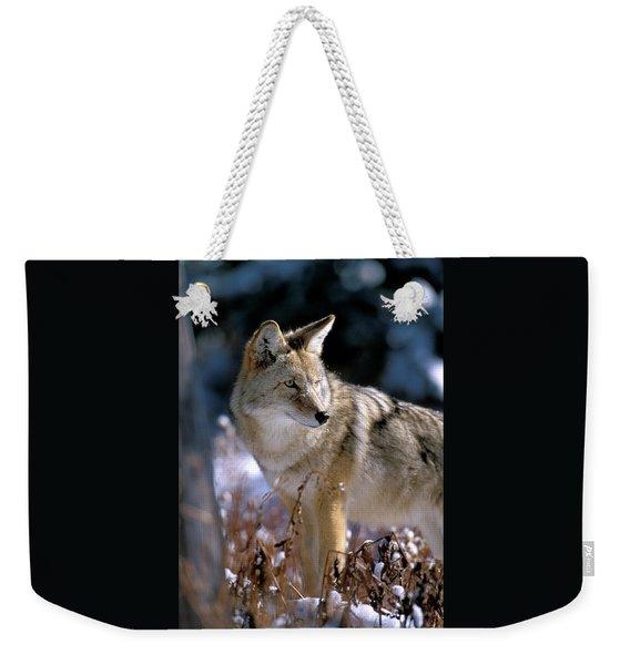 Coyote In Winter Light Weekender Tote Bag