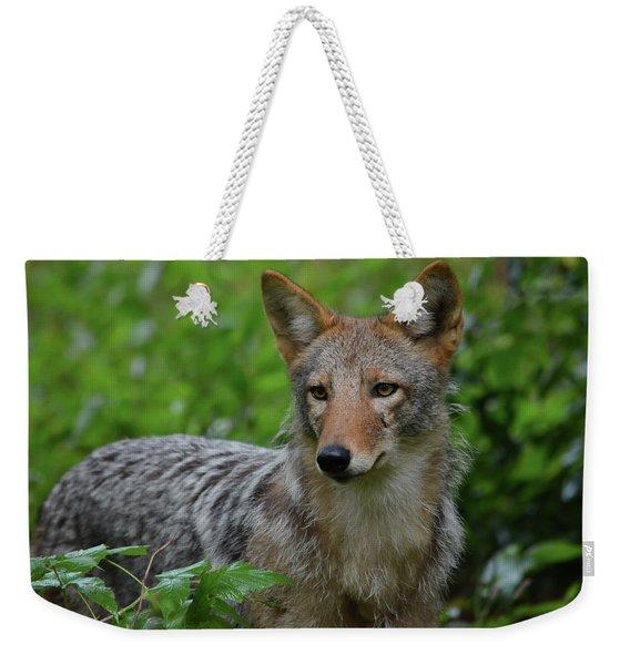 Coyote On The Prowl  Weekender Tote Bag