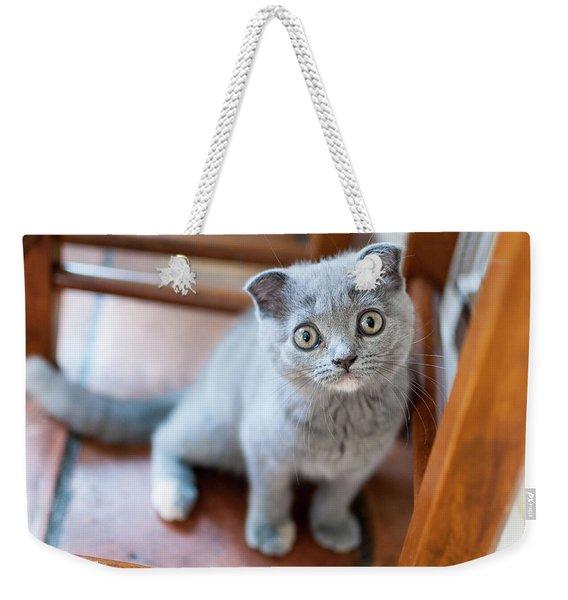Cute Scottish Fold Kitten Sits Looking Up Weekender Tote Bag