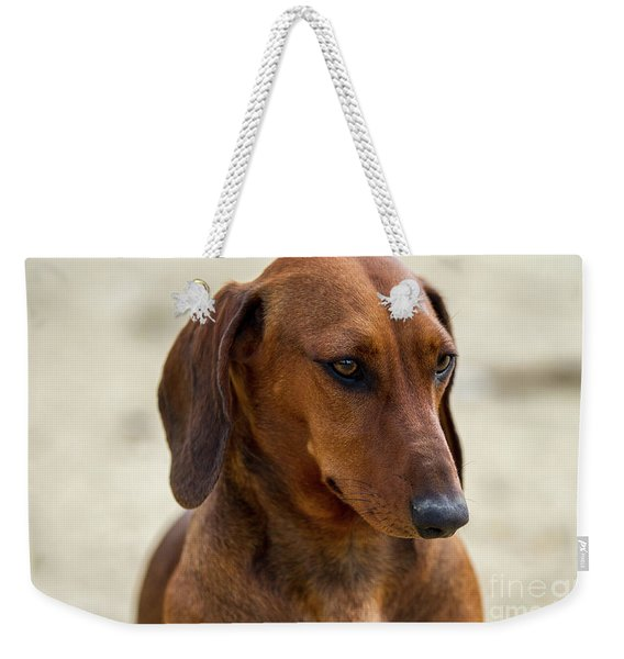 Dachshund Portrait Weekender Tote Bag