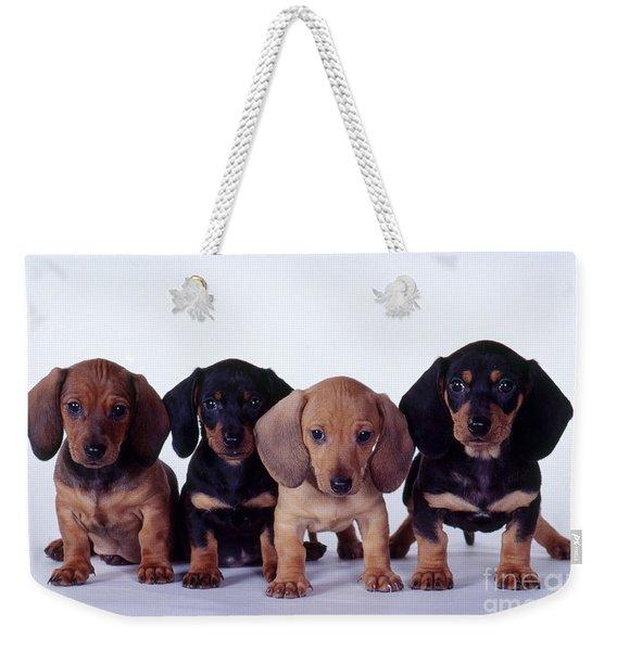 Dachshund Puppies  Weekender Tote Bag