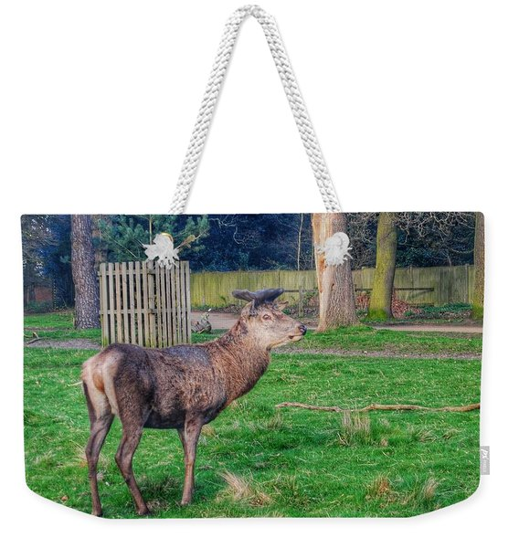 Deer Spotted At Richmond Park  Weekender Tote Bag