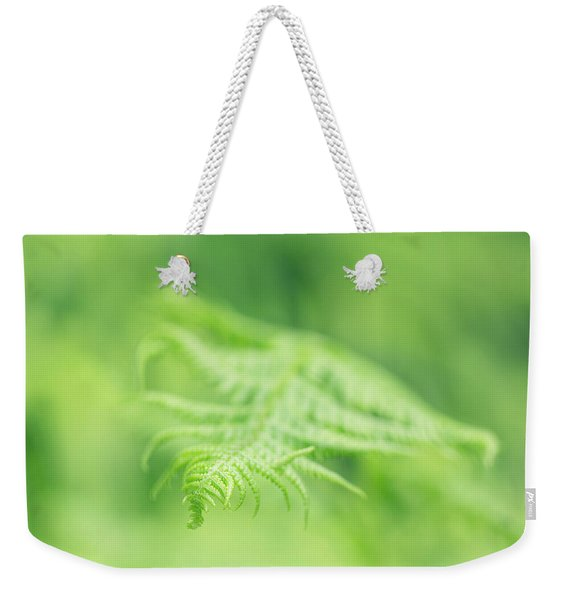 Weekender Tote Bag featuring the photograph Delicate Fern - Hipster Photo Square by Charmian Vistaunet
