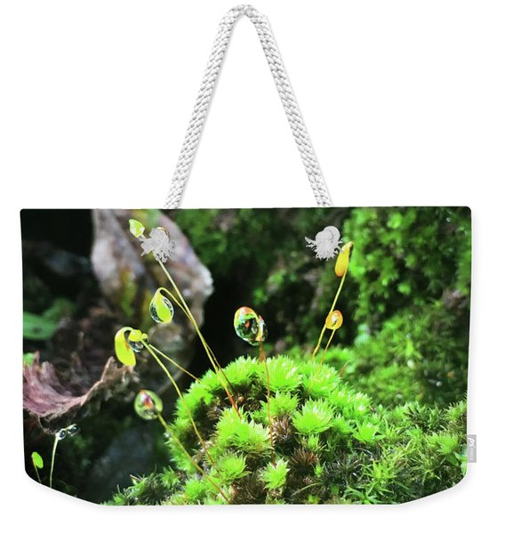 Dew Drops On Moss And Sprouts In The Sun Weekender Tote Bag