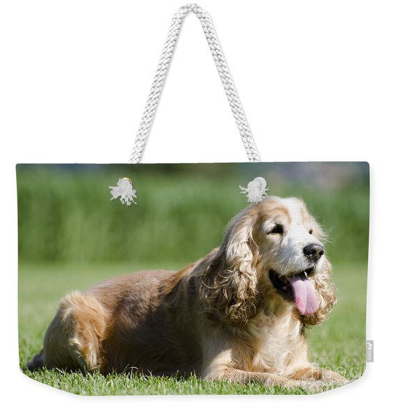 Dog Lying Down On The Green Grass Weekender Tote Bag