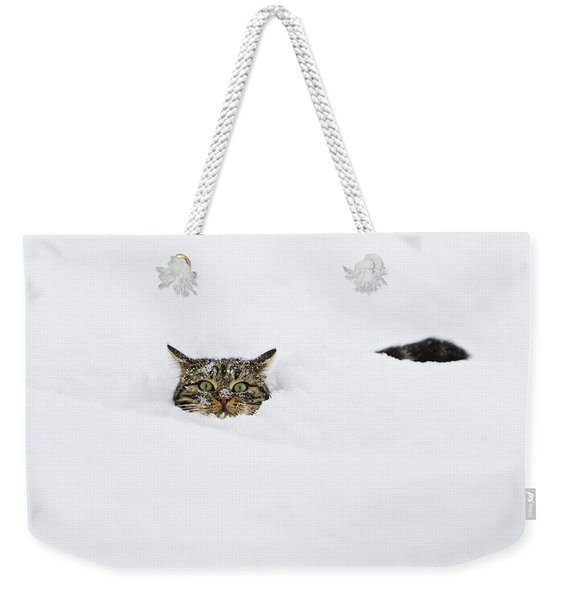 Domestic Cat Felis Catus In Deep Snow Weekender Tote Bag