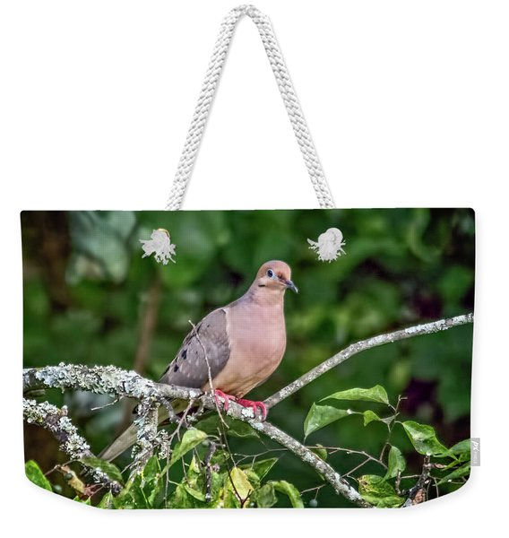 Dove On A Branch Weekender Tote Bag
