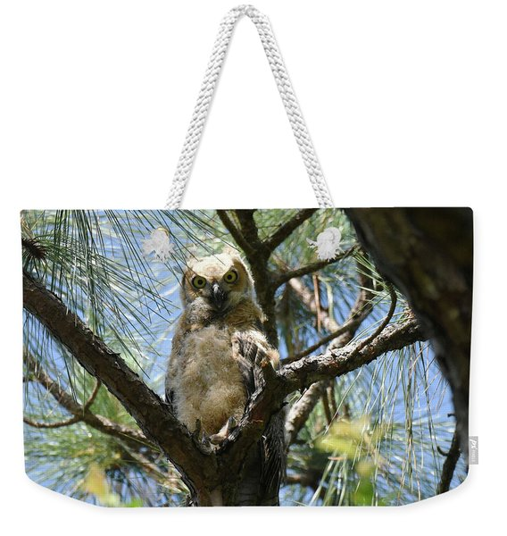 Weekender Tote Bag featuring the photograph Downy Chested Owlet by Sally Sperry