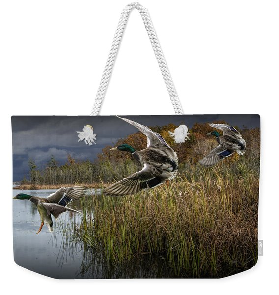 Drake Mallard Ducks Coming In For A Landing Weekender Tote Bag