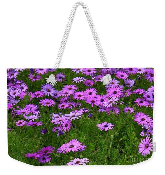 Dreaming Of Purple Daisies  Weekender Tote Bag
