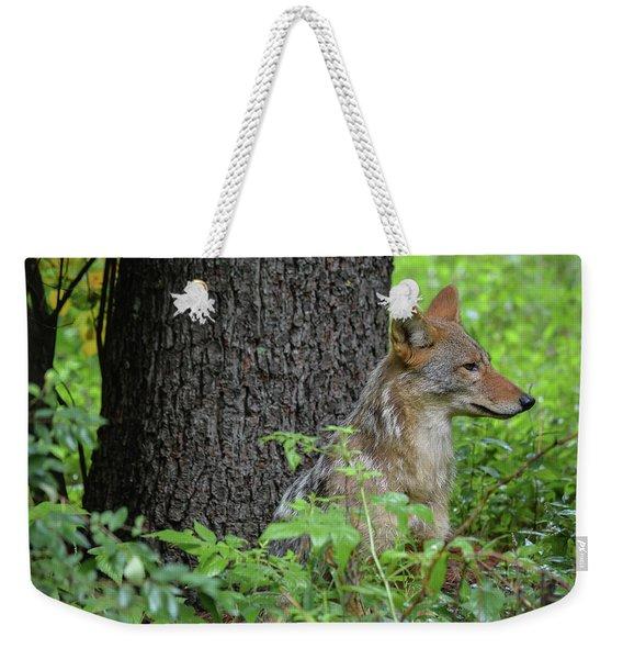 Early Morning Coyote In Maine Weekender Tote Bag