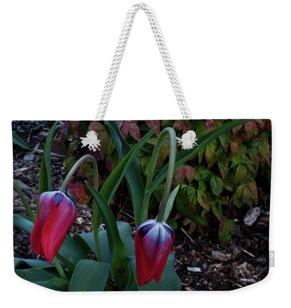 Early Morning Nodding Tulips Weekender Tote Bag