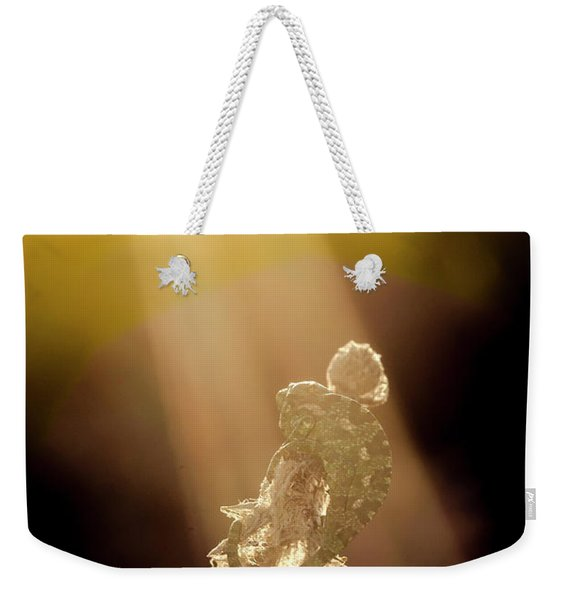 Weekender Tote Bag featuring the photograph Early Morning Sun Bath by Arik Baltinester