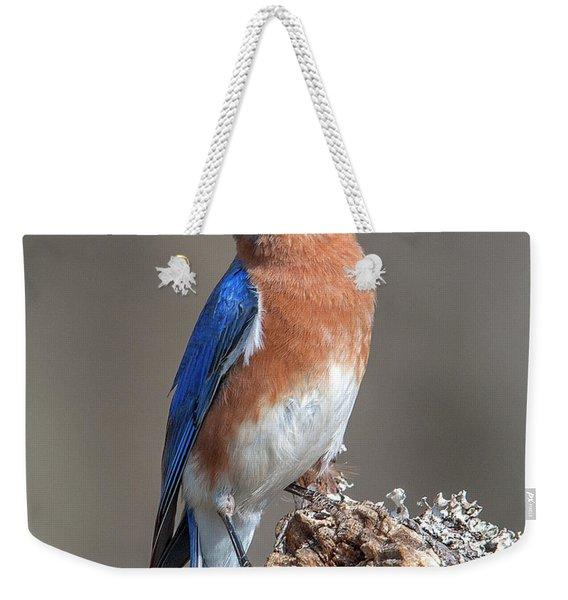 Eastern Bluebird Dsb0300 Weekender Tote Bag