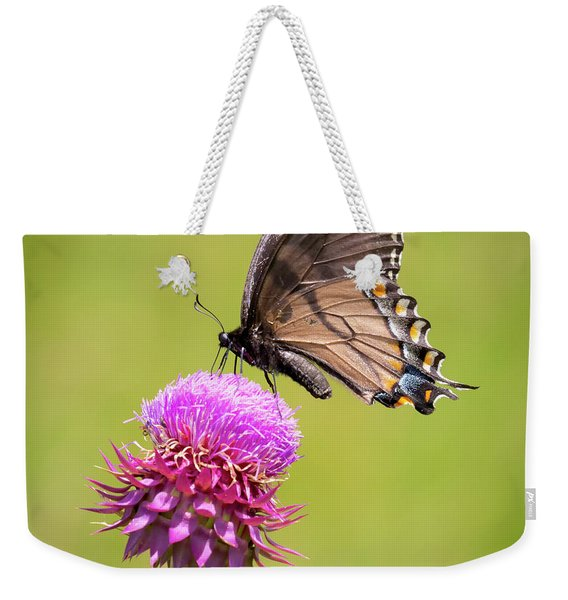 Eastern Tiger Swallowtail Dark Form  Weekender Tote Bag