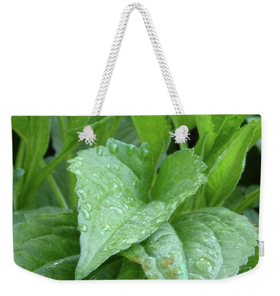 Echinacea After The Rain I Weekender Tote Bag