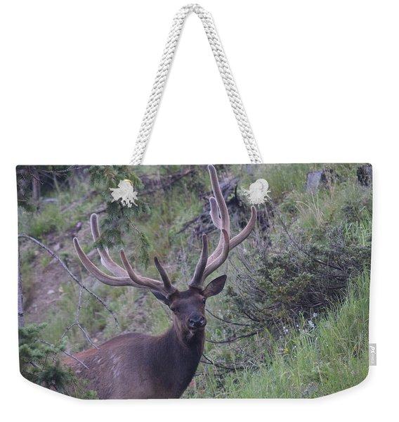 Weekender Tote Bag featuring the photograph Bull Elk Rmnp Co by Margarethe Binkley