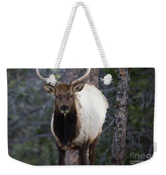 Elk In The Rockies Weekender Tote Bag