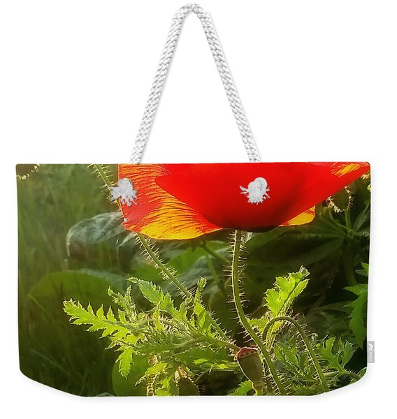 Red Poppy At Sunset Weekender Tote Bag
