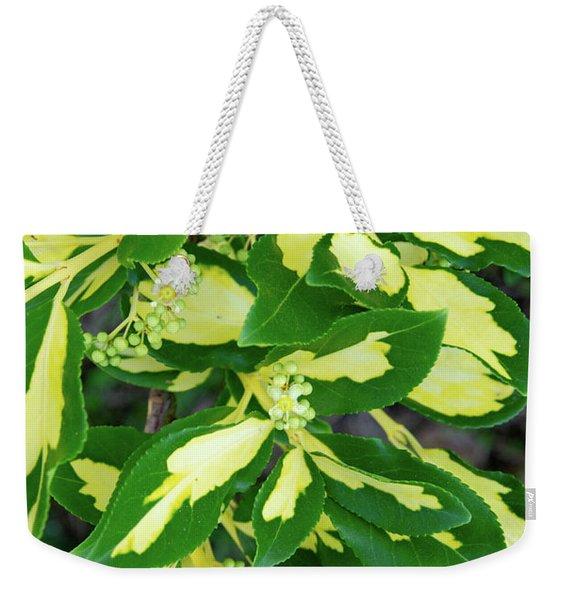 Euonymus Blondy Shrub 2 Weekender Tote Bag