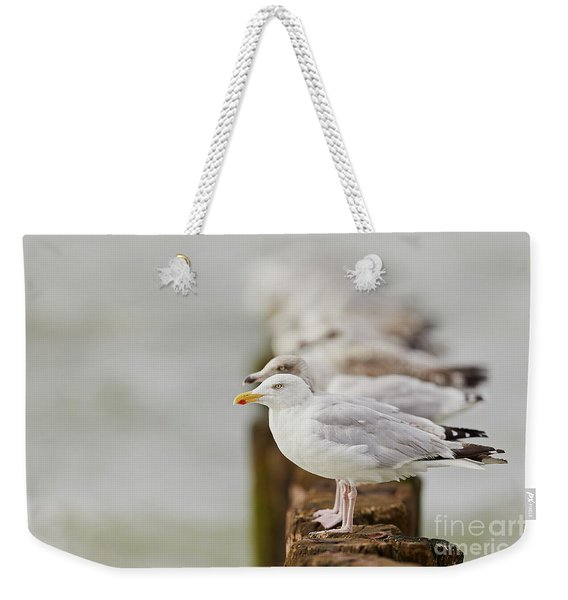 European Herring Gulls In A Row Fading In The Background Weekender Tote Bag