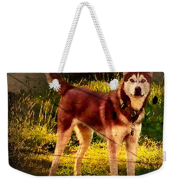 Weekender Tote Bag featuring the photograph Expressive Mixed Media Husky A4116 by Mas Art Studio