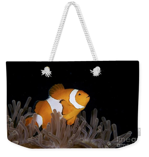 False Clownfish And Anemone Weekender Tote Bag