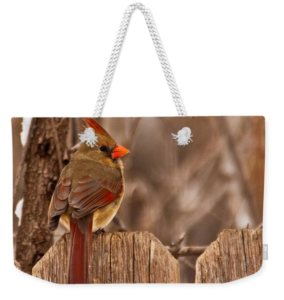 Female Cardinal On The Fence Weekender Tote Bag