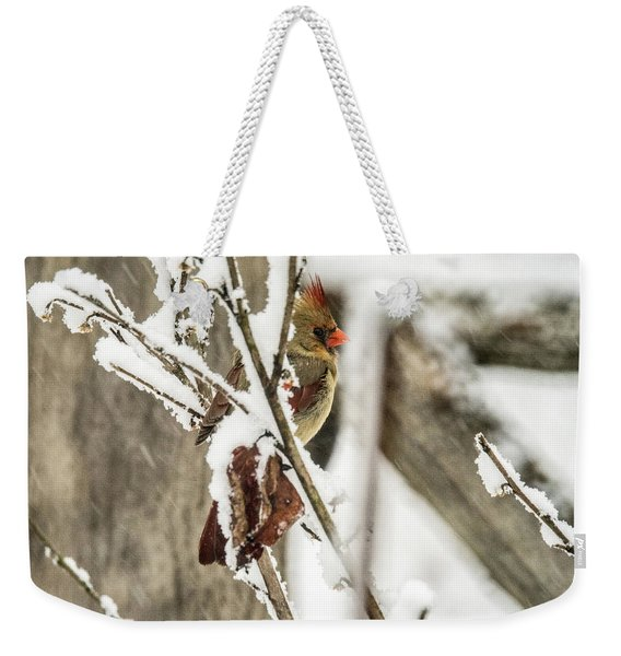Female Readbird Through The Snow Covered Branches Weekender Tote Bag