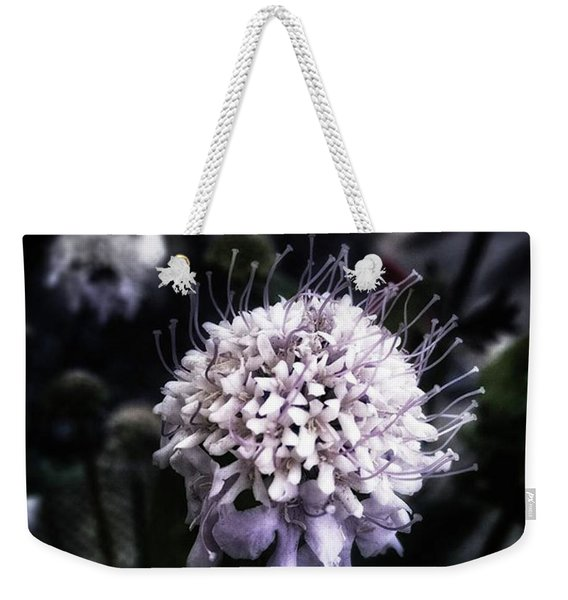 Weekender Tote Bag featuring the photograph Field Scabious. A Member Of The by Mr Photojimsf