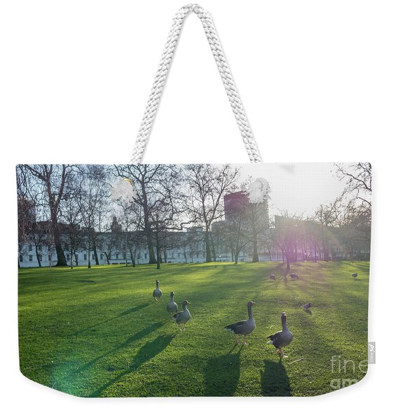 Five Ducks Walking In Line At Sunset With London Museum In The B Weekender Tote Bag