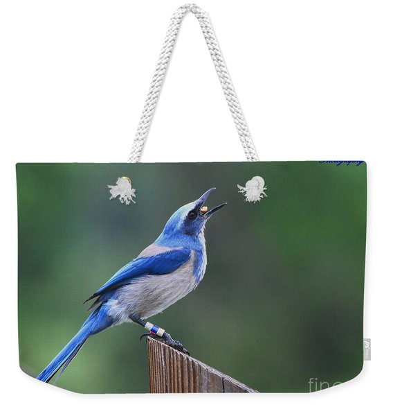 Florida Scrub Jay Eating Weekender Tote Bag