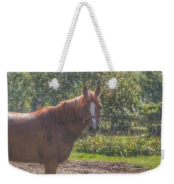 1010 - Froede Roads' Chestnut Brown Weekender Tote Bag
