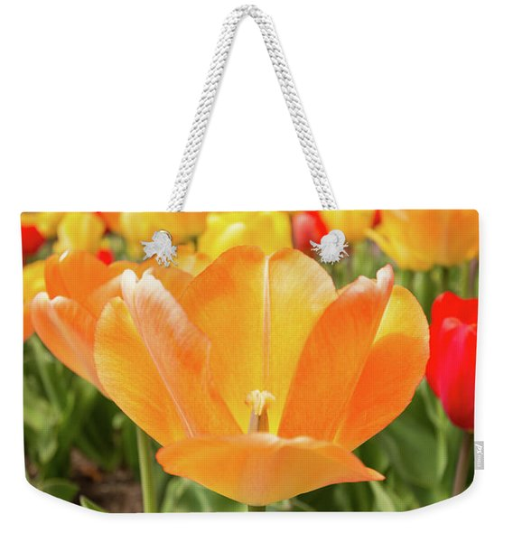 Weekender Tote Bag featuring the photograph Front Of The Tulips by Brian Hale