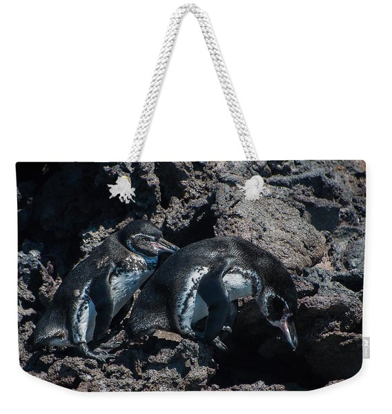 Galapagos Penguins  Bartelome Bartholomew Island Galapagos Islands Weekender Tote Bag