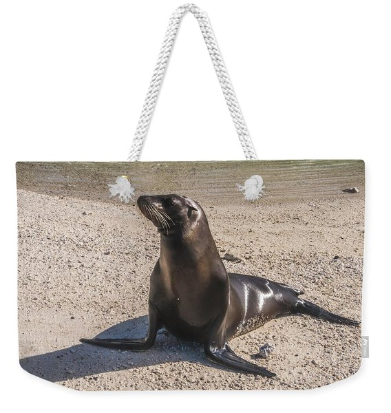 Galapagos Sea Lion Weekender Tote Bag