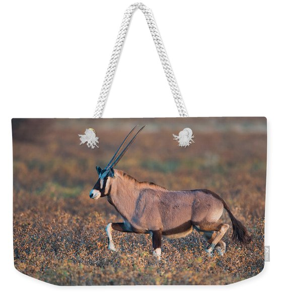 Gemsbok Oryx Gazelle In A Field, Etosha Weekender Tote Bag