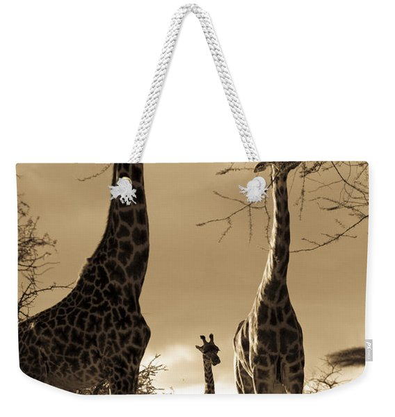Giraffe Stretch Their Necks To Reach Weekender Tote Bag