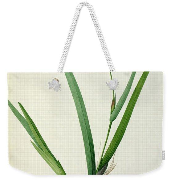 Gladiolus Cardinalis Weekender Tote Bag