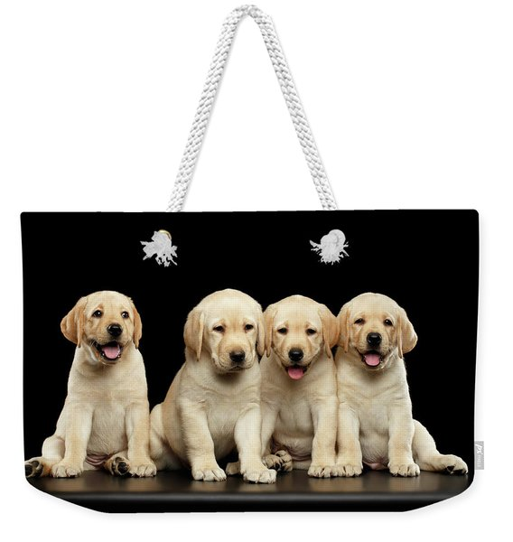 Golden Labrador Retriever Puppies Isolated On Black Background Weekender Tote Bag