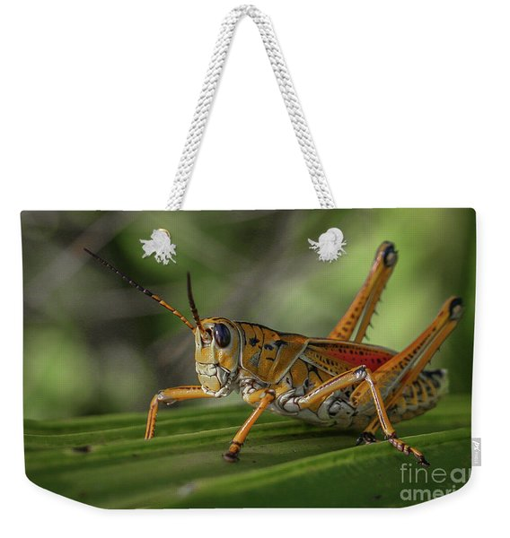 Weekender Tote Bag featuring the photograph Grasshopper And Palm Frond by Tom Claud