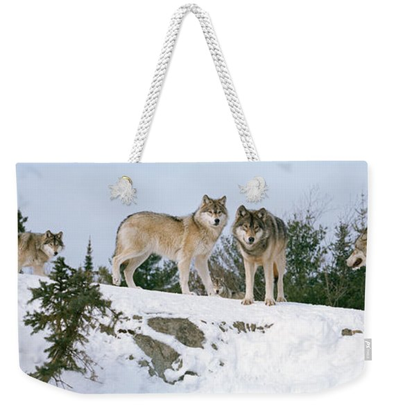 Gray Wolves Canis Lupus In A Forest Weekender Tote Bag